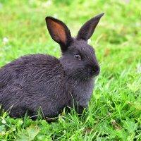 Кролик. :: Наталья
