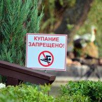 Купание запрещено...А так хотелось:) :: Татьяна Евдокимова
