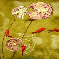 Есть в старом парке тихий пруд :: Alexander Varykhanov
