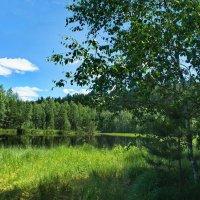 Согрета тишина июльским зноем... :: Лесо-Вед (Баранов)