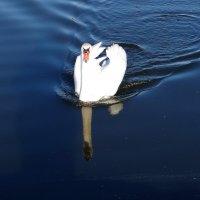 Утро на озере. :: Антонина Гугаева