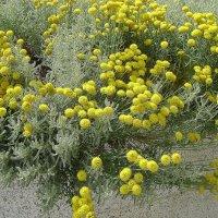 Городские цветы 4 :: Марина Домосилецкая