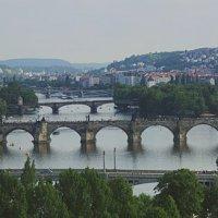 Вид на мосты Праги. Смотровая площадка в Летенских садах :: Константин Тимченко
