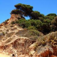 Португалия. Ольюш де Агуа. Дорога к океану. :: Лариса (Phinikia) Двойникова
