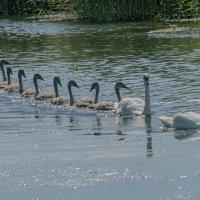 Вот это семья! :: Viktor Makarov