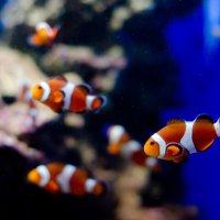 Рыбки :: Мария Ларионова