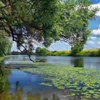 Дичают рыбные места... :: Лесо-Вед (Баранов)
