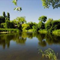 Наш пруд. :: Anatol Livtsov