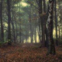 Лесной туман :: Сергей Шабуневич