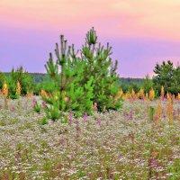 Полевые цветы,полевые цветы.Сколько в вас неподдельной живой красоты.. :: Алла Кочергина