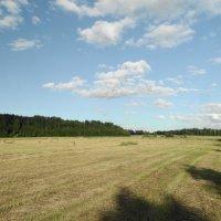 поле :: Михаил Жуковский