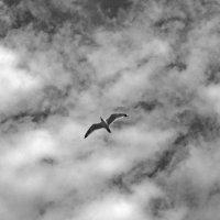 Высокий полет. :: сергей лебедев
