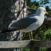 Птица :: Анатолий Шумилин