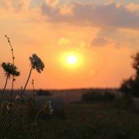 Июльский закат в поле :: оксана косатенко