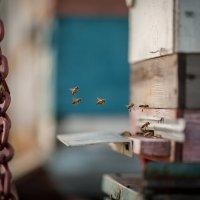 пчелки :: V l a d & m i R