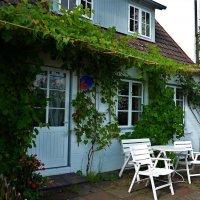 Виноградная лоза украшает дом :: Nina Yudicheva