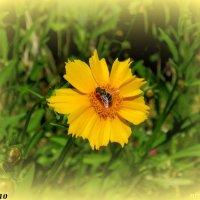 Солнечный цветок :: Нина Бутко