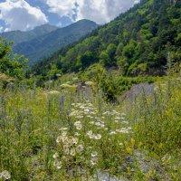 Летние подружки, Белые ромашки, Вам лесные феи Выткали рубашки .. :: ФотоЛюбка *