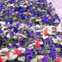 Цветы для настроения :: Svetlana Lyaxovich