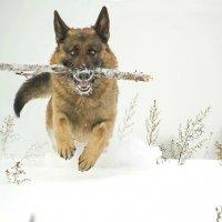 снегоход :: Юлия Маркелова