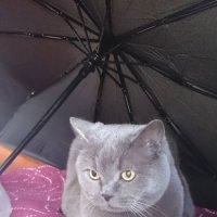 Опять мокро :: Galina194701