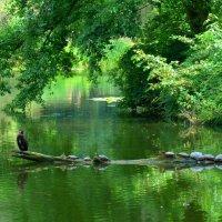 Баклан и черепахи :: Nina Yudicheva