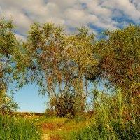 деревья на берегу :: Александр Прокудин