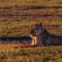 В лучах закатного солнца...Танзания! :: Александр Вивчарик