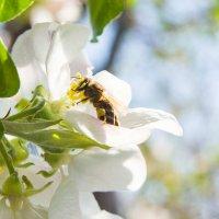 Конкурс. Фото цветов - на фоне неба # 2. Цветущий апрель - N1 :: Наталья (ShadeNataly) Мельник