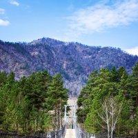 Мост в Горном Алтае :: Alisia Ray
