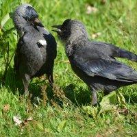 общение :: linnud