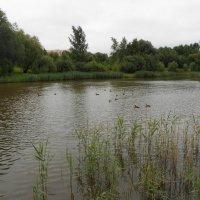 Слегка зарябилась вода на пруду :: Tarka