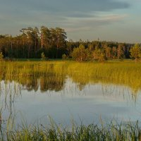 Вот такое болото ... :: Александр Буланов