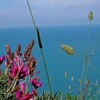 Цветы и море :: Владимир