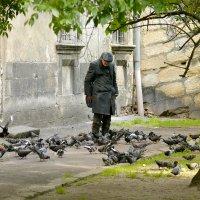Старик и голуби.... :: Юрий Гординский