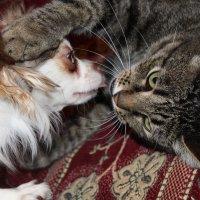 Молли и кот Кузя :: игорь