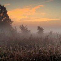 утренний туман.. :: юрий иванов
