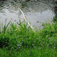 На берегу очень тихой реки :: Нина Бутко