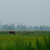 Лошадь в тумане :: Сергей Царёв