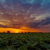 Восход солнца :: Андрей Володин