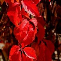 Вспоминая осень :: Светлана