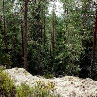 Национальный парк «Реповеси». :: Елена Павлова (Смолова)