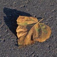 Осенний лист :: Odissey