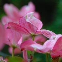 Розовый туман :: spm62 Baiakhcheva Svetlana