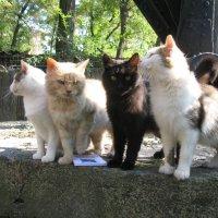 Дартаньян и три мушкетёра... :: Алекс Аро Аро