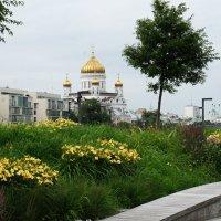 Вид из парка :: Александр Матюхин