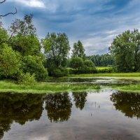 Лесное озеро. :: Владимир Безбородов