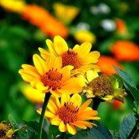 Цветы :: Сергей Карачин