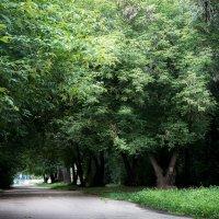 Зеленая аллея, зеленые листы, стоят деревья строем, сомкнув свои ряды :: Елена Дорогина