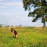 цветочное поле и Жанна) :: Юлия Маркелова